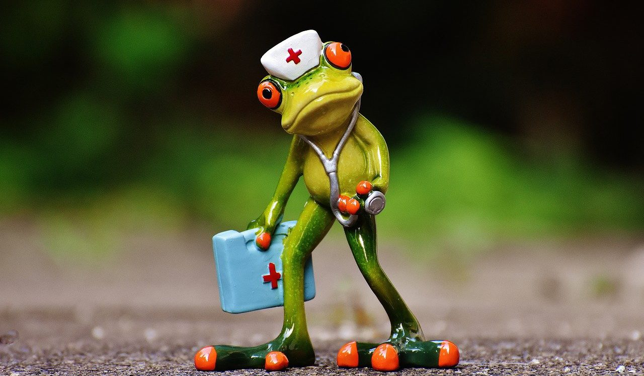 frog-1672942_1280.jpg